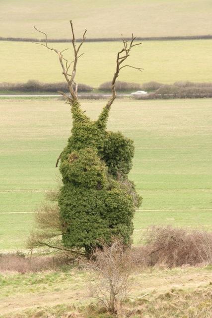An oddly-shaped tree