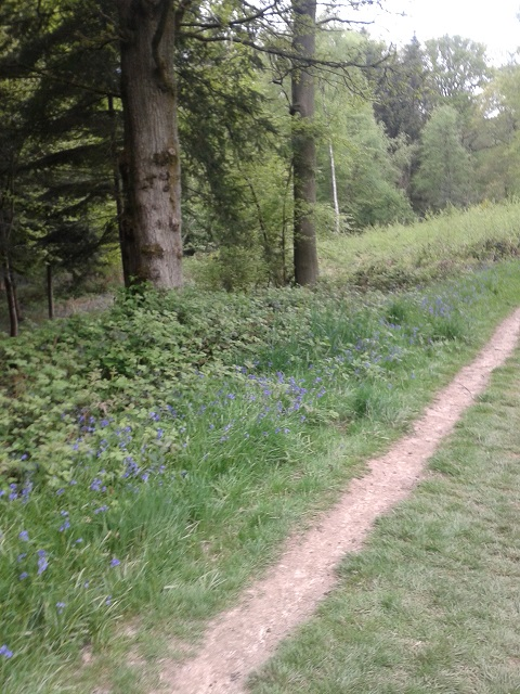 Bluebell Walk and Mid Sussex 40th 190513 043