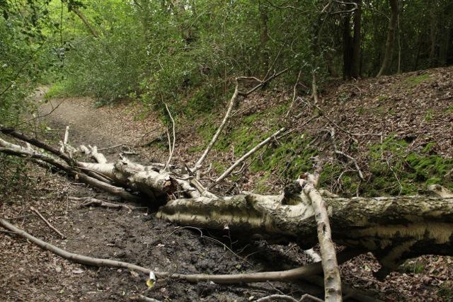 Fallen Tree in Mud