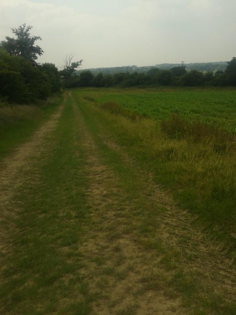 Grassy track by field