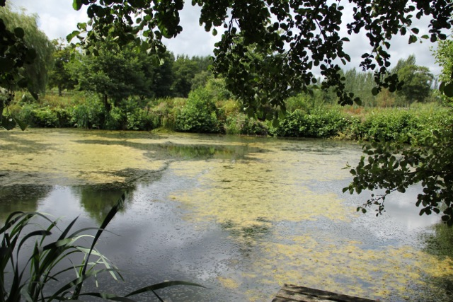 A still lake